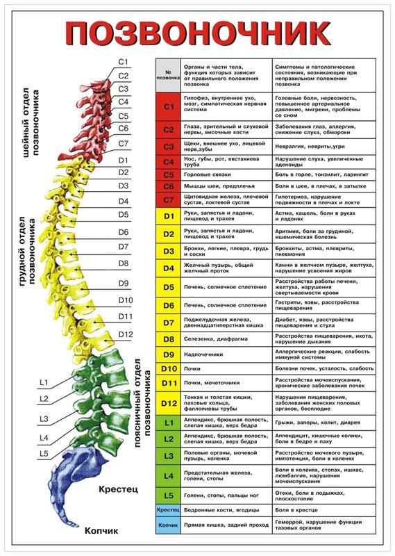 Остеопатия при болях в спине